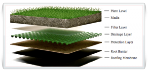 green-roofing-layers