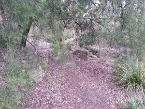 Open paths through the bushland