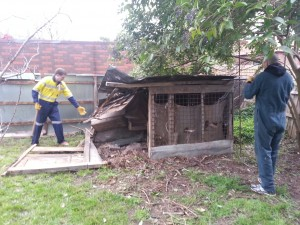 Knocking down the chook shed