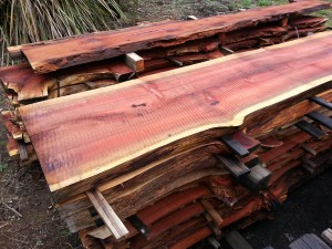 Redwood timber sections air drying