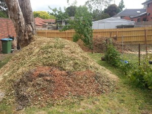 Piles of mulch produced from Ash tree removal
