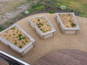 Each house at Live at the Cape has space for a vegetable garden