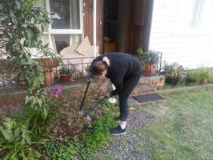 Trimming shrubs for the dismantling